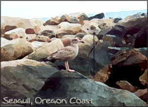 seagull, Oregon coast