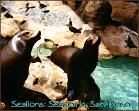 sealions at seaworld, san diego